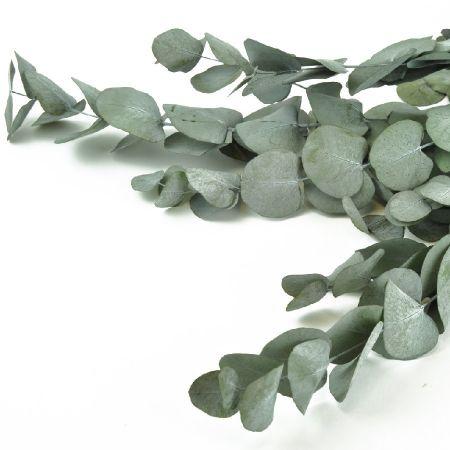 Bouquet d'eucalyptus...
