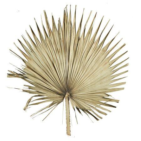 Feuille de palme géante - 1 m