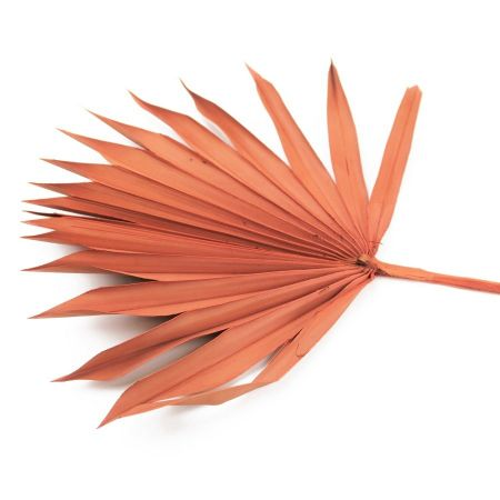 """6 feuilles oranges """"palm sun"""""""