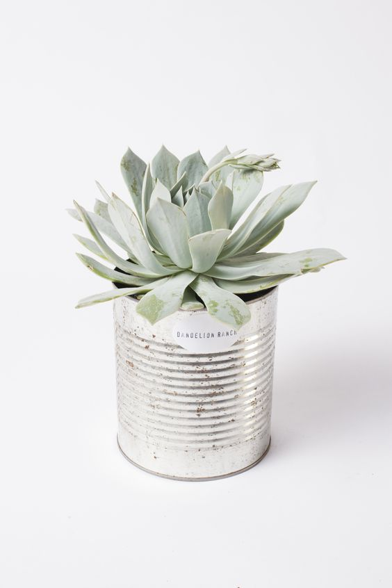 cache pot cactus boite de conserve