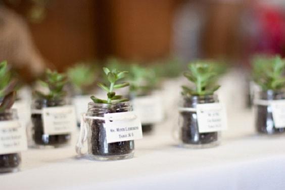 succulentes 564